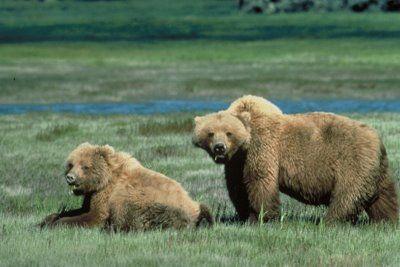 Parque Nacional de Yellowstone 6