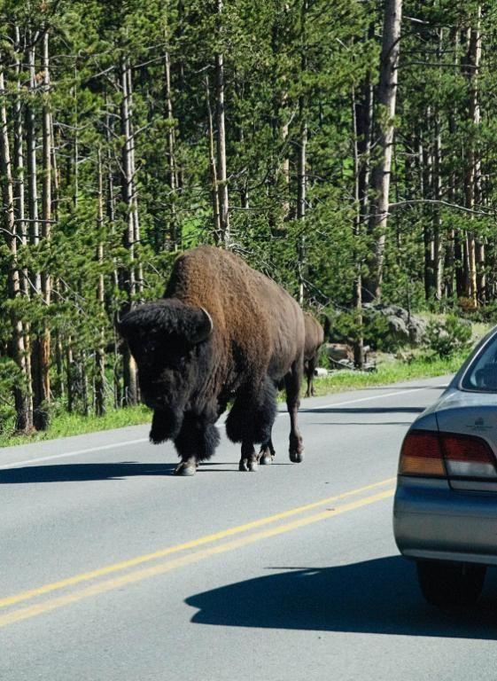 Parque Nacional de Yellowstone 8