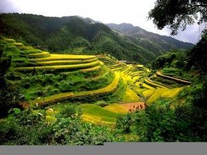 China-Rice-Terraces