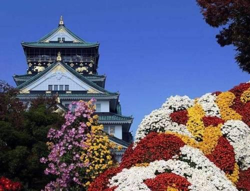 flores-en-japon