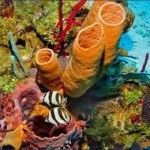 segunda barrera de arrecifes mas grande