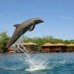 show de delfines en Roatan