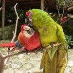 diversidad de fauna en yojoa