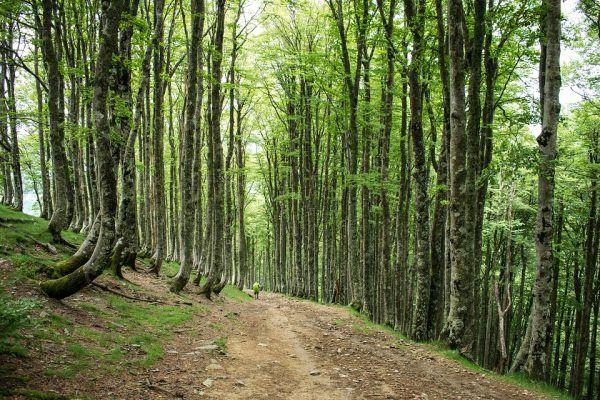 5 Motivos para Hacer el Camino de Santiago en Otoño