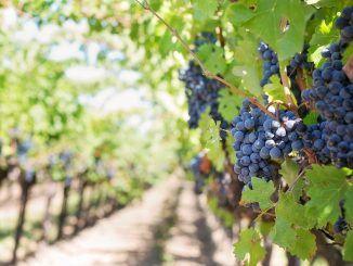 Vivanco Cultura de Vino Oferta de Enoturismo en La Rioja